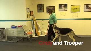 Our Gang Group Dog Training: Canine Companions Class