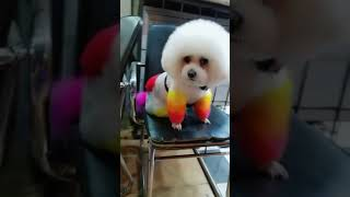 Look at these cute and funny puppies dogs 3199