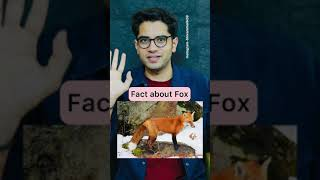Shocking Fact about fox 🦊 😳 #shorts #shivammalik