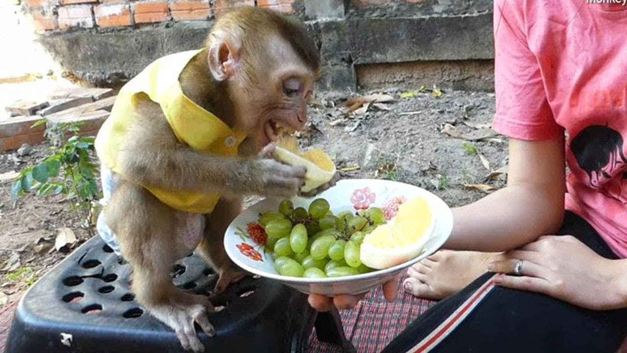 Monkey Baby Dodo, Get Much Green Grapes And Sweet Oranges