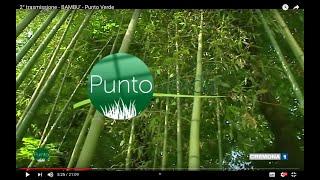 2° trasmissione - BAMBU' -  Punto Verde