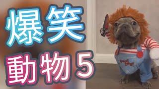 超搞笑動物影片迷因合輯 | Funny  Animal Memes #1005  | 貓搞笑 | 狗搞笑 | 動物搞笑