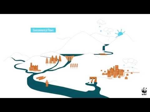 Understanding Environmental Flows