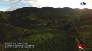 FlyflyPicture - Bharat Tea Plantation, Cameron Highlands, Pahang (re-edit video)