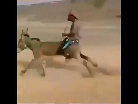 Watsapp üçün çox maraqlı video