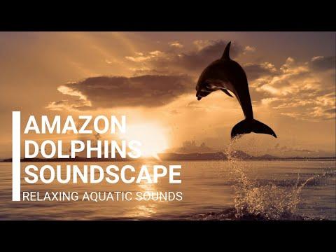 amazon-dolphins-soundscape---relaxing-aquatic-sounds