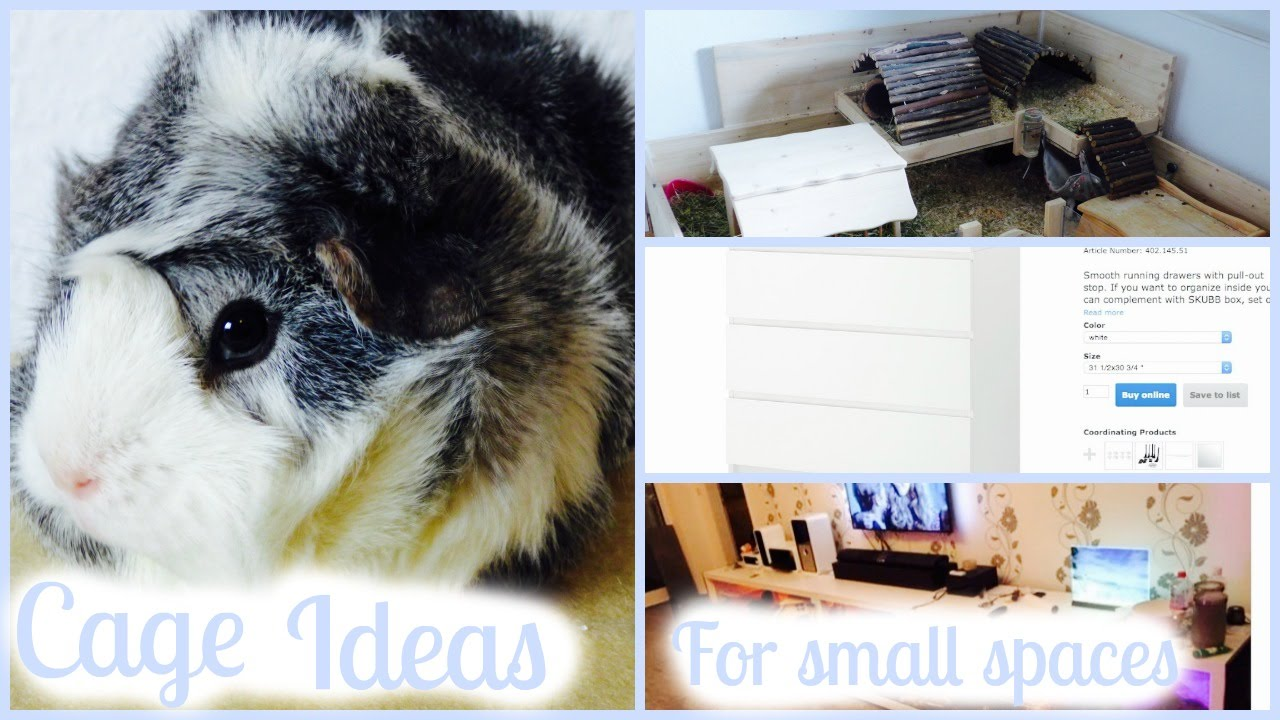 Tiny Home Designs: Space-Saving Guinea Pig Cage Ideas