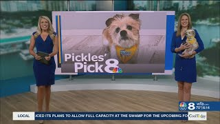 Pickles' Pick
