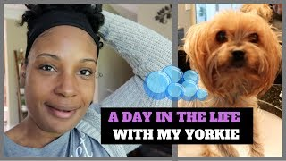 A DAY IN THE LIFE WITH MY YORKIE LOVEE