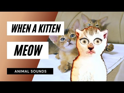 When A Kitten Meow - Sound Effect - Animation