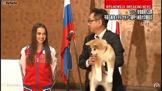 Японская делегация подарила Алине Загитовой щенка акита-ину thumbnail