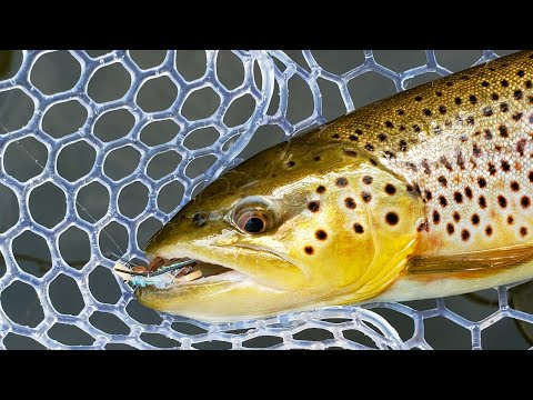 Fly Fishing Terrestrials For Trout/Dry Fly Fishing