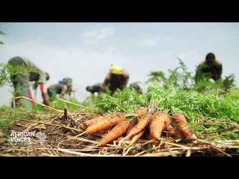 African Change-Makers: Godfrey Nzamujo - Songhai Centre