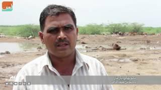 حول العالمفن و منوعات  المنبوذون في الهند يضربون عن جمع جيف الأبقار