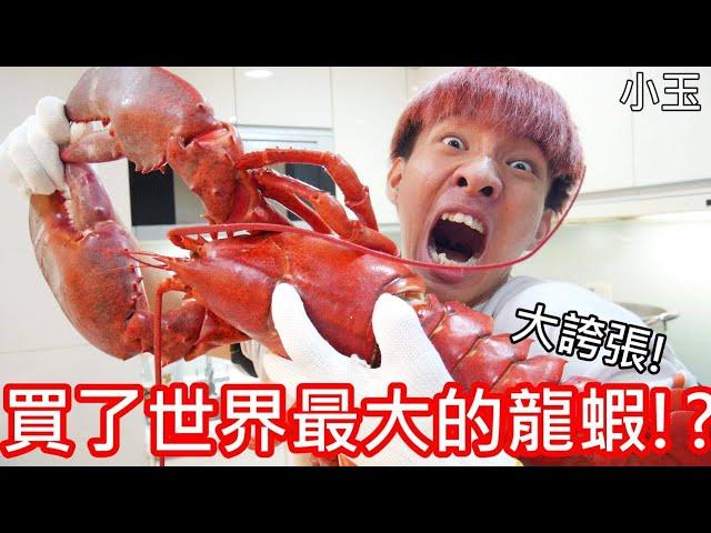 【小玉】大誇張!我買了世界最大的龍蝦!?【全長65公分】