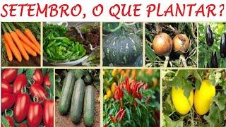 O Que Plantar Em Setembro Na Sua Horta E Pomar