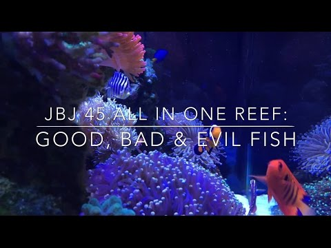 JBJ 45 All In One Reef: Good, Bad & Evil Fish
