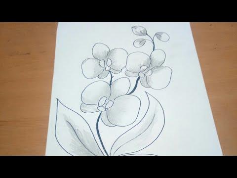 Sketsa Bunga Anggrek Utk Batik Buat Belajar Menggambar Anak Sekolah Youtube