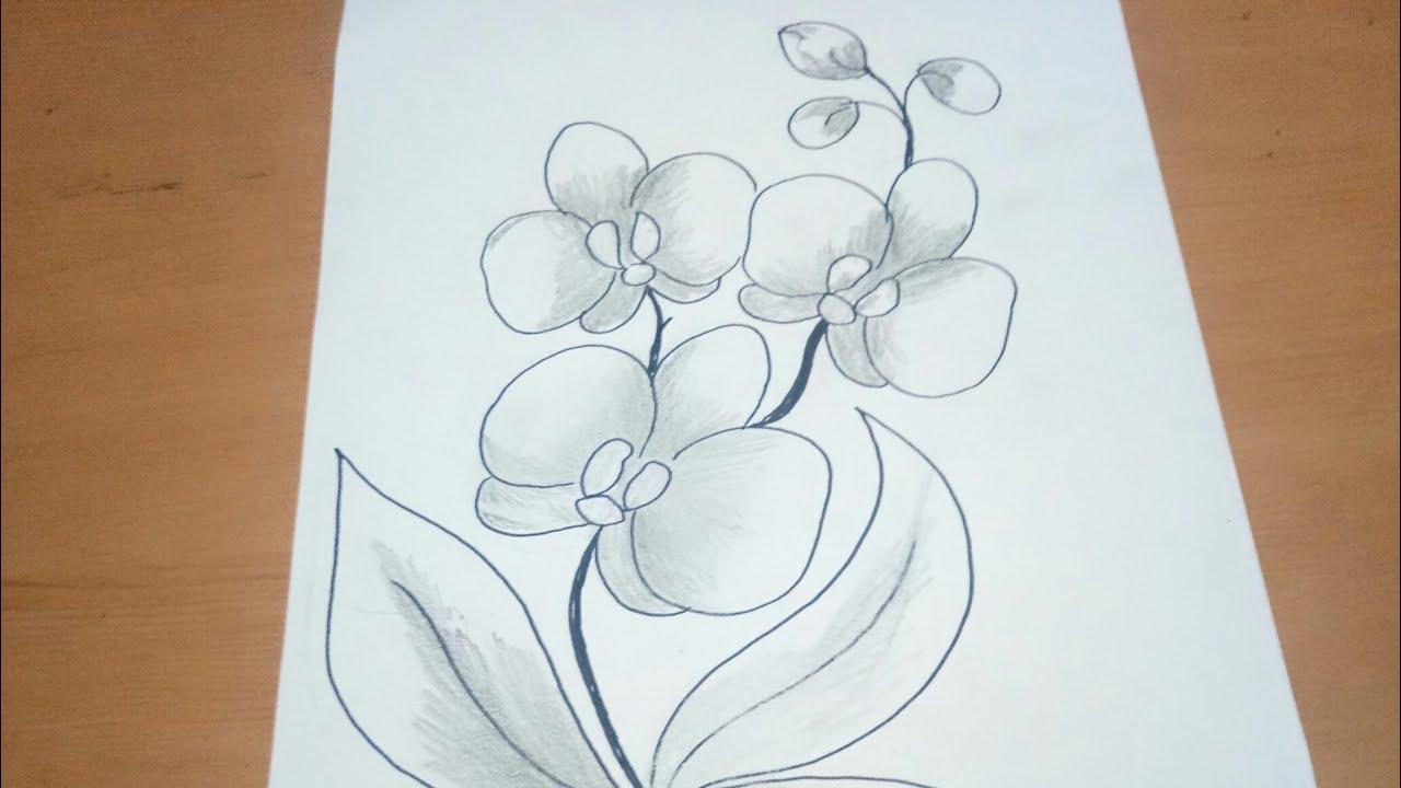 Sketsa Anggrek Sketsa Menggambar Bunga