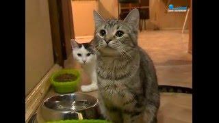 Эрмитажный кот не стал ловить мышей в Капелле
