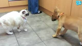 Animals  Funny Videos 2018... Funny2all