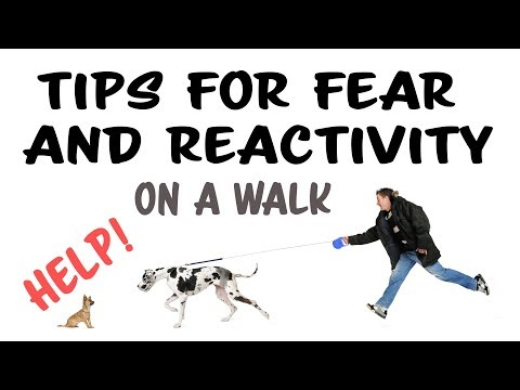 Training Tips for Fear and Reactivity on a Walk