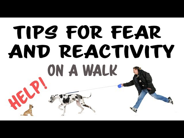 Training Tips for Fear and Reactivity on a Walk - Kikopup Dog Training