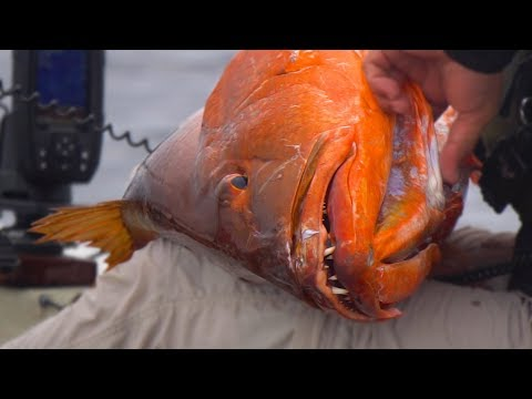 Fishing for MONSTER Cubera Snapper from Kayaks | Field Trips Panama