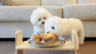 Leaving My Puppies Alone with a Whole Chicken (Unexpected Result...)