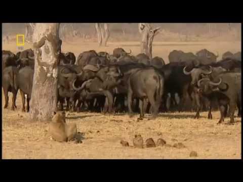 Doğa'da Vahşi Yaşam!    Türkçe Dublaj HD   Belgesel   YouTube