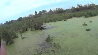 видео охота на качок