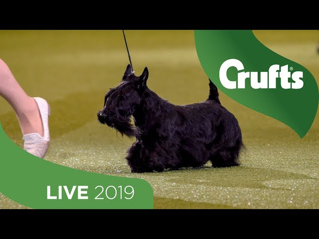Crufts 2019 Day 3 - Part 3 LIVE