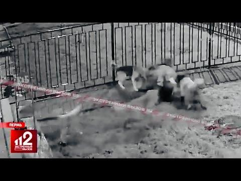 Стая собак РАЗОРВАЛА СТАРУШКУ! | От тела почти ничего не осталось