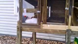 Building A Rabbit Hutch Pt. 6 Final