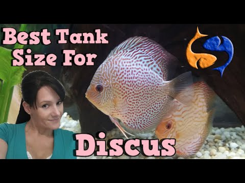 Whats The Best Tank Size For Discus Talkin Presented By Kgtropicals