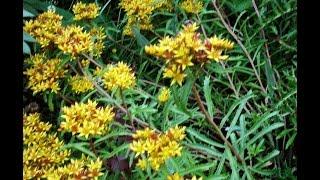 Цветы. Многолетние растения для альпийской горки. Многолетники для сада.