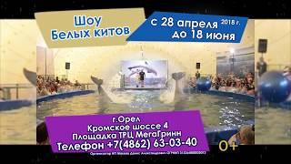 Шоу Белых Китов г.Орёл 2018