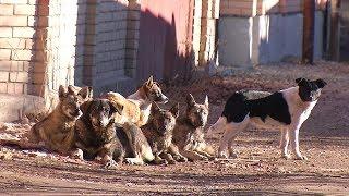 Жители Кисловодска страдают от бездомных собак