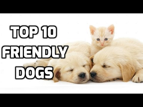 Top 10 Friendly Dogs(Good Dogs)