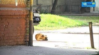 Короли Шерстянки: свора животных держит в страхе целый микрорайон