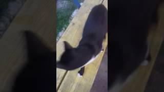 Кошка понимает команды