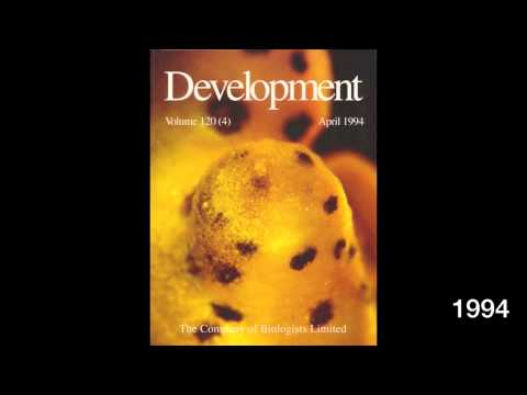 The covers of Development