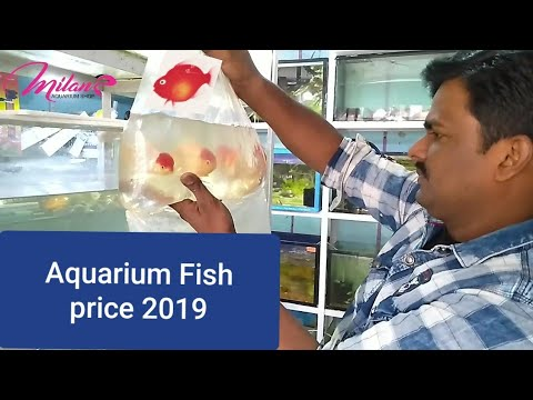 Aquarium Fish Price With Name's 2019 In INDIA  New Fish Stock Update Aquarium Decoration Ideas