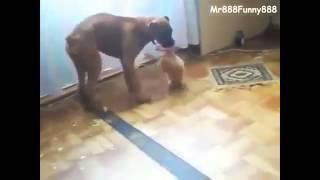 Сильно голодный котёнок