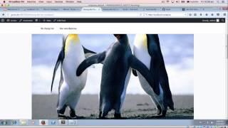 Cách tạo menu trong Wordpress