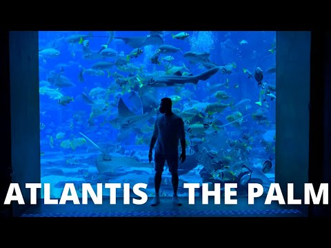 Dubai, Atlantis The Palm // The Lost Chambers Aquarium (is it worth it??)