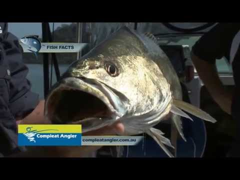 BFSB Season1 Ep 9 Hawkesbury Monster Jewfish