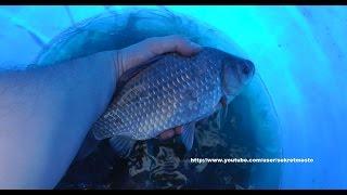 Рыбалка на карася с фидером осенью(Данная рыбалка на карася происходила осенью, и как всегда клев был довольно непредсказуемый. Ловили мы..., 2015-03-05T03:56:04.000Z)