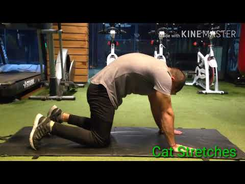 Low Back Pain  Relief  Exercises by Roadies fitness