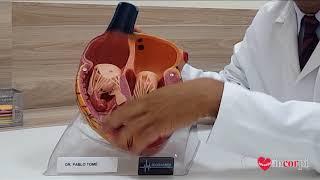 Cardiovasculares congênita doenças cardiopatia